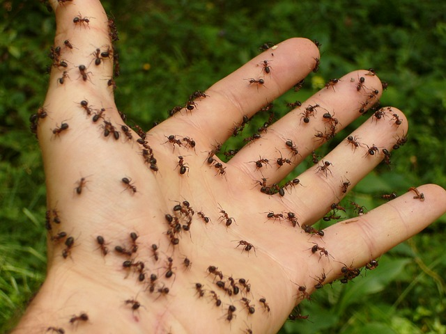 mravenci na ruce