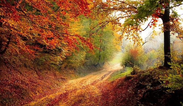 cesta vedle lesa
