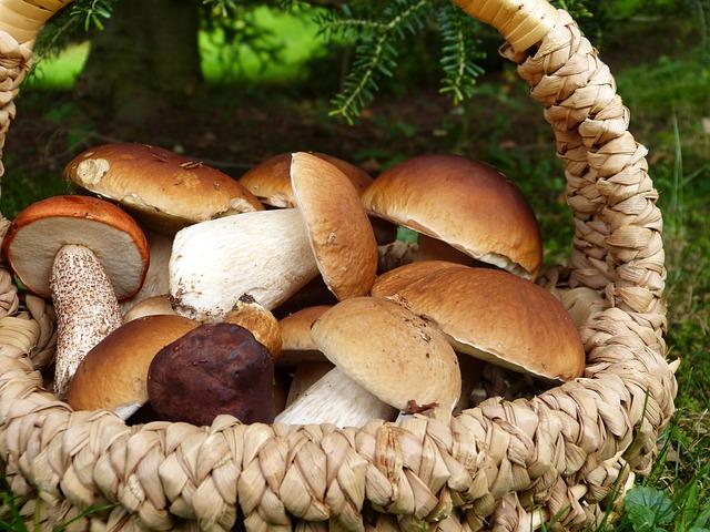 houby v košíku